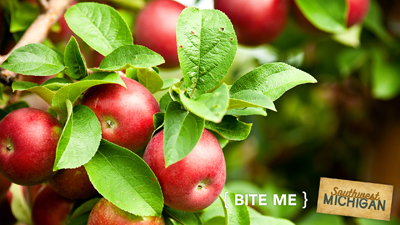 Bite Me - Apples